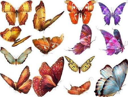 پروانه Butterfly PSD