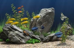 اسکرین سیور آکواریوم Aquarium Real Life