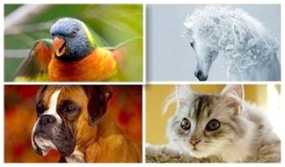 کاغذ دیواری Animals Wallpapers