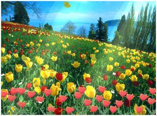 دانلود اسکرین سیور گلها Flower Dawn Screensaver
