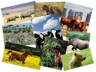 دانلود زمینه دسکتاپ حیوانات